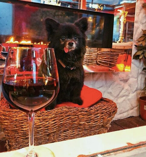 cat with red wine - thedoghousehowth.com